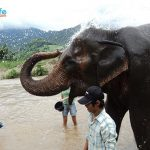 Plight of the Asian Elephant: An Emotional Visit to the Elephant Nature Park in Chiang Mai