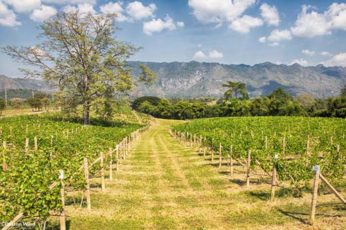 khao-yai-winery-tour