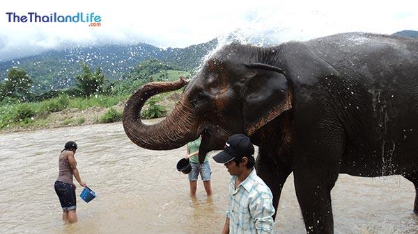 elephant-natura-park-chiang-mai