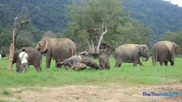 thailand-elephant-nature-park
