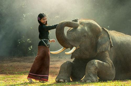 elephant-thailand