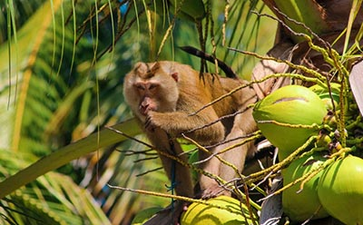 pattaya monkey training centre