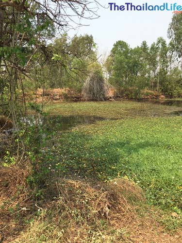 buy land in thailand