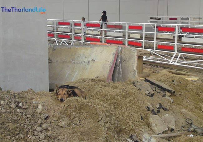 soi-dog-building-site