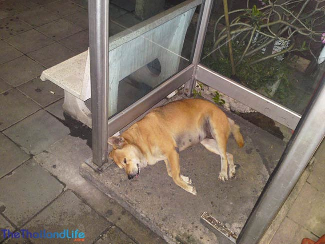 soi dog phone box
