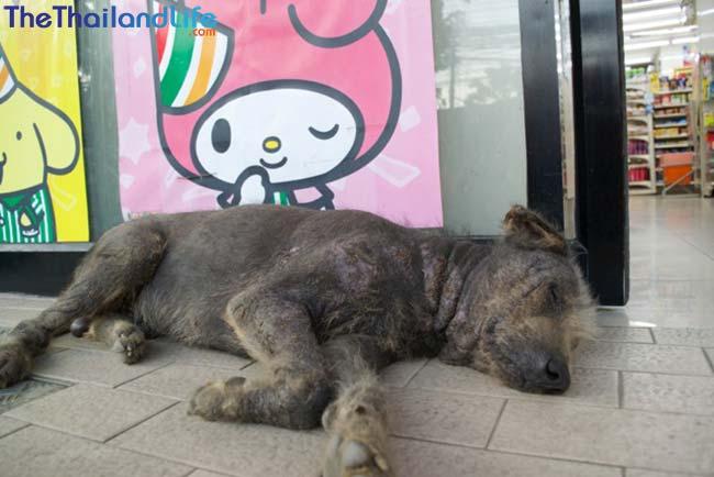 thai dog 7-11