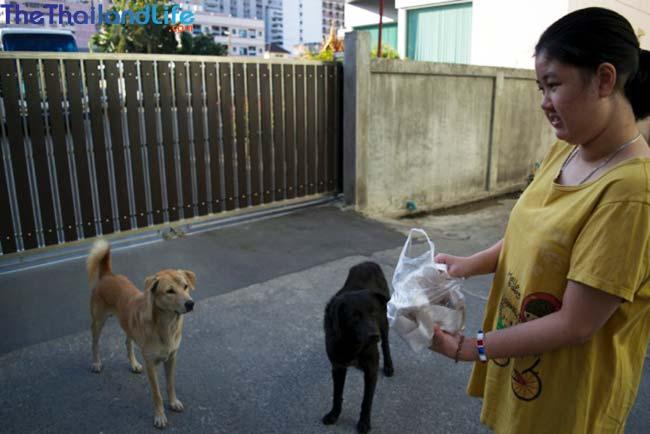 thai feeding soi dog