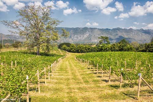 khao-yai-winery-tour