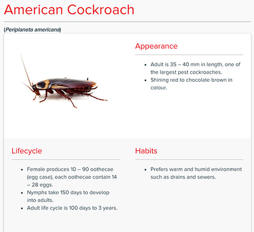 Cockroaches In Thailand An Step Prevention Guide