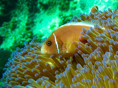 koh tao best diving sites