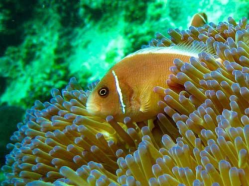 koh tao best diving sites