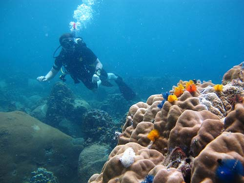 best diving sites in thailand