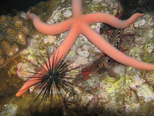 similan islands best diving sites