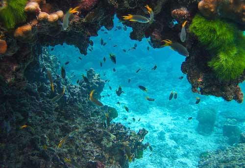 adaman sea diving