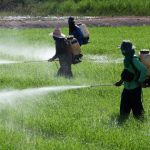 The Truth About Pesticides in Thailand's Food Chain
