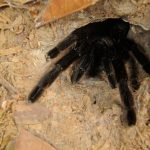 10  Most Common Spider Species in Thailand