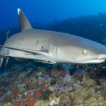 Sharks of Thailand: Species, Locations, Risk & Attack History