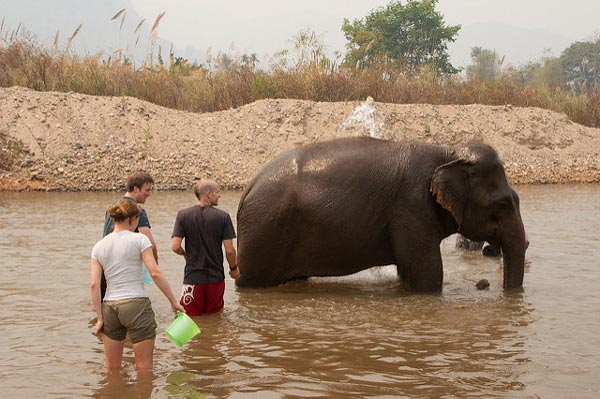 volunteer-elephants-thailand