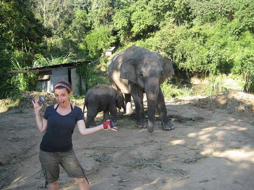 elephants-chiang-mai-trekking