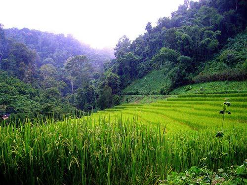 trekking-chiang-mai