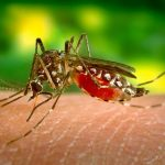 Dengue Fever: A Comprehensive Traveler's Guide