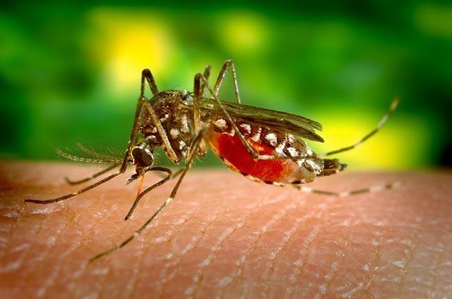 dengue-fever-thailand