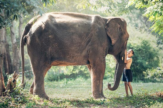 beautiful-elephant-thailand