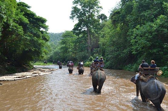 elephant-tourism-thailand