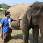 10 Reasons You Should Never Ride Elephants In Thailand & What to Do Instead